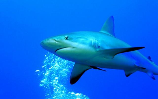 36 Foto S Van Haaien Schitterende Haaienfoto S