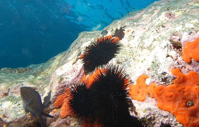 zee egels